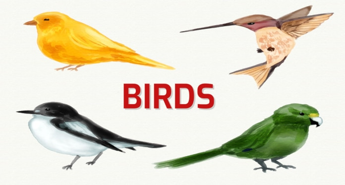 Birds Vocabulary in English – With Games Pictures and Quizzes