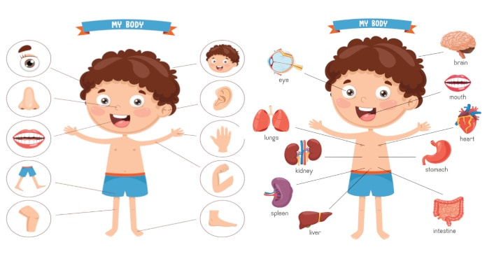 body parts vocabulary in English