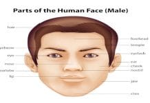 Face vocabulary image in English